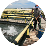 Deep sea cage breeding base